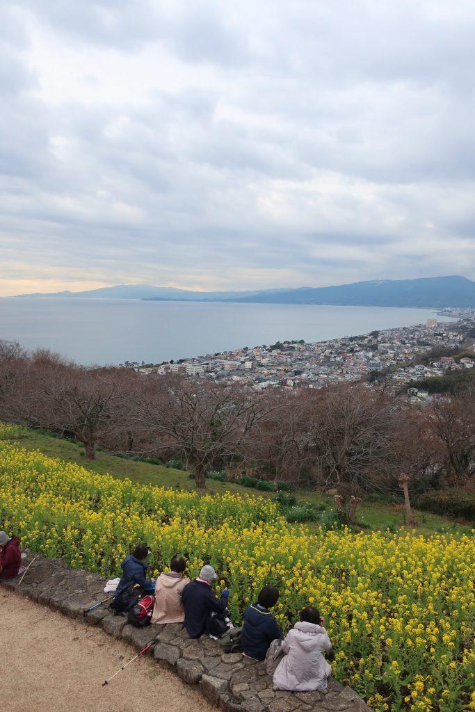 菜の花と梅沢海岸