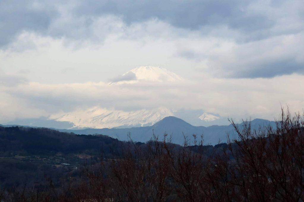 吾妻山公園菜の花展望台からの富士山