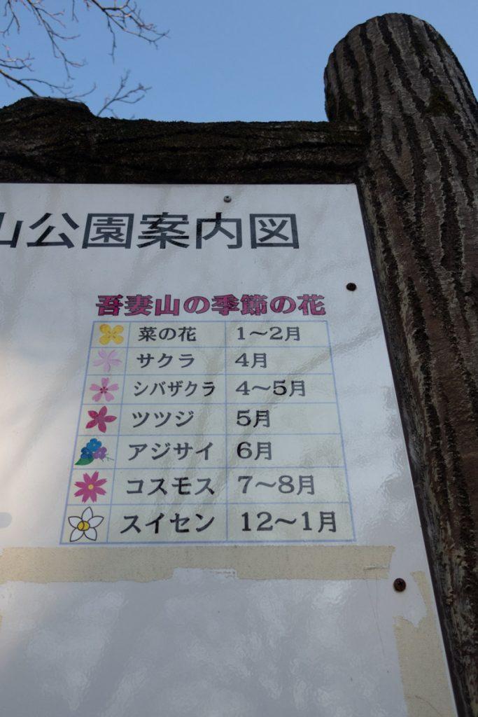 吾妻山の季節の花