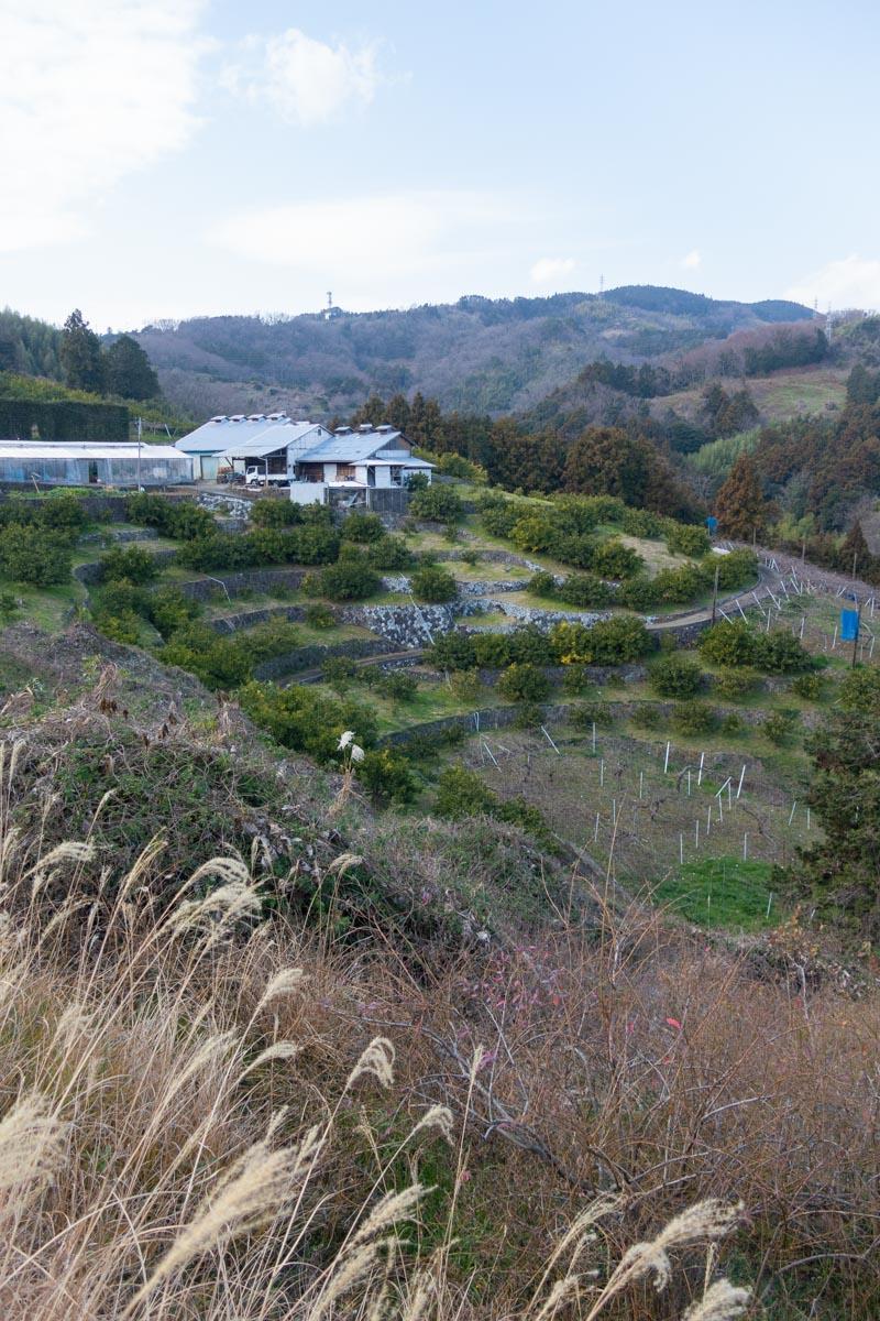沼代農道絶景の段々畑