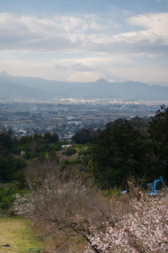 曽我梅林 富士山と足柄平野