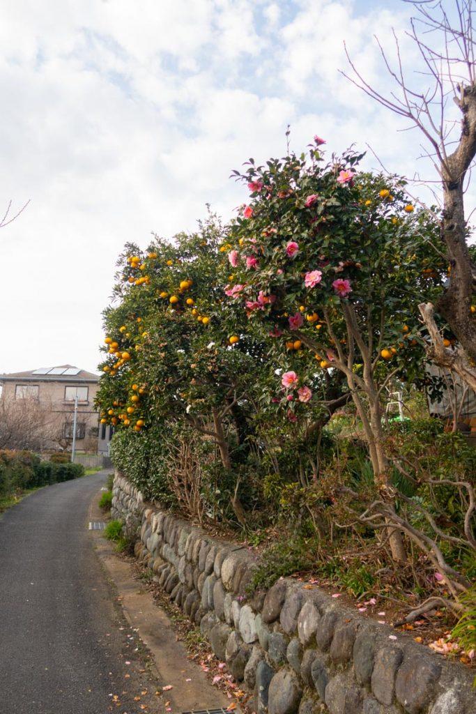 花や実の小径